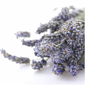 dried lavender blossoms 350