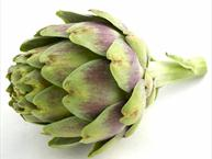 thornless artichokes