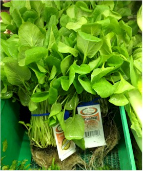watercress with roots in grocery store
