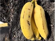 asian bananas