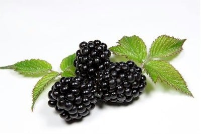 blackberry (blackberries)