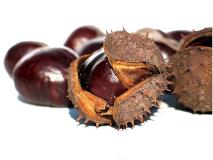 chestnuts with hull