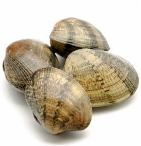 clams in shell