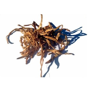 dried lily buds