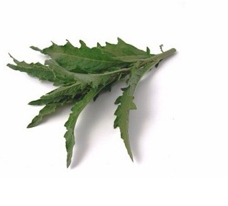 epazote leaves