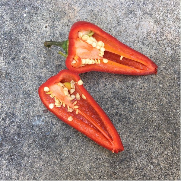 fresno chiles cut in half