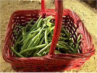 wax beans substitutes ingredients equivalents gourmetsleuth. Black Bedroom Furniture Sets. Home Design Ideas