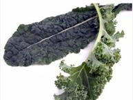 kale leaves