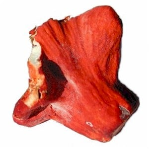 http://www.gourmetsleuth.com/images/lobster_mushrooms_300.jpg