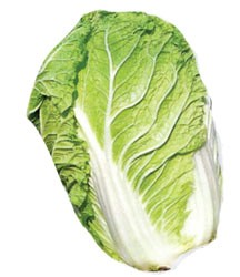 Napa Cabbage Substitutes Ingredients Equivalents Gourmetsleuth