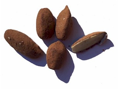 pili-nuts-with-cocoa
