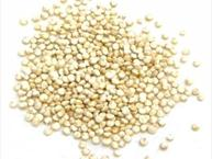Quinoa - An Ancient Nutritious Grain