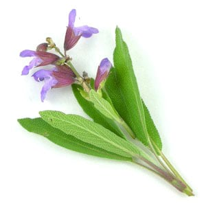 sage leaves with flowers