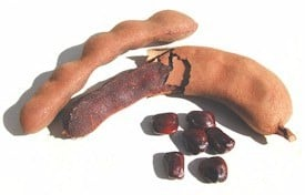 tamarind pods and seeds