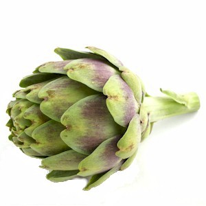 thornless artichoke