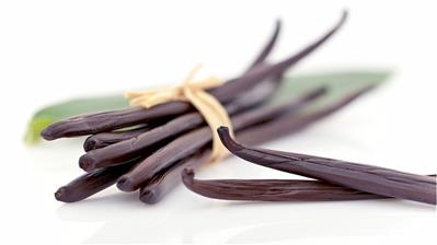 bundle of vanilla beans