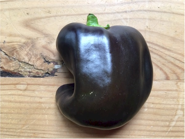 nutrisystem day 67 bell pepper back