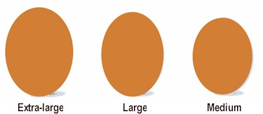 diagam of common chicken egg sizes