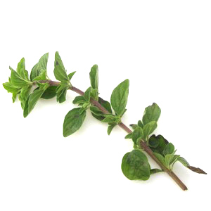 fresh-oregano.jpg