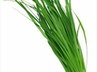 garlic-chives.jpg