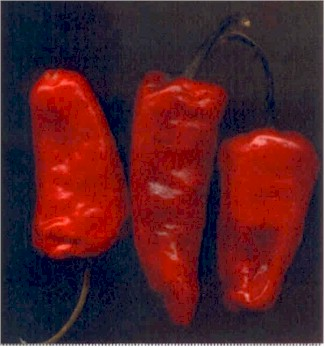 Guaque Chile Substitutes Ingredients Equivalents Gourmetsleuth