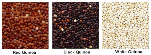 three quinoa varieties