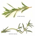 winter and summer savory